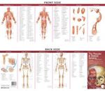 Picture of Anatomical Chart Company's Illustrated Pocket Anatomy: The Muscular & Skeletal Systems Study Guide