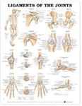 Picture of Anatomical Wall Chart