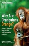 Picture of Why Are Orangutans Orange?