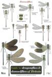 Picture of Guide to Dragonflies and Damselflies of Britain Identification Sheet