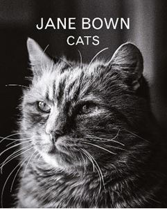 Picture of Jane Bown: Cats
