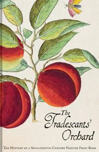 Picture of Tradescants' Orchard: The Mystery of a Seventeenth-Century Painted Fruit Book
