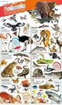 Picture of DKfindout! Animals Poster