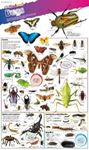 Picture of DKfindout! Bugs Poster
